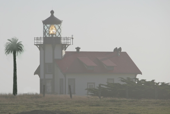 lighthousepalm
